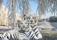DIY Diamond Painting Part Drill 5D Embroidery White Tiger Kits Art Mural Decor