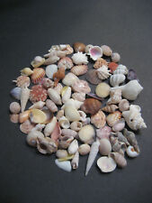 Lot of 100+ Assorted Mini Shell Mix From Siesta Key Beach Great for Crafting
