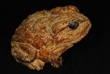Old Japanese Bamboo Root Statue 'Frog' Hand‐carved Okimono Taisho era #891