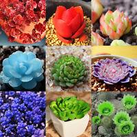60Pcs Bulk Rare Succulent Process Seeds Organic Plants Mini Flower Garden Office