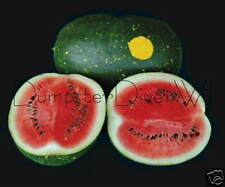 Red  Moon & Stars Heirloom Organic 40 lb Very Sweet WATERMELON  20 seeds NON-GMO
