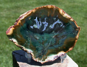SiS: Very DARK GREEN & BLUE AGATE African Petrified Woodworthia - ULTRA-RARE!