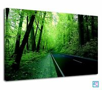 Lovely Street In The Middle Of Bright Green Forest Canvas Print Wall Art Picture