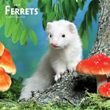 2019 Ferrets Wall Calendar, Small Pets by BrownTrout