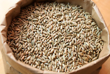 5lb Organic Cereal Rye Whole Grain Berries Best Quality Untreated Ship Free