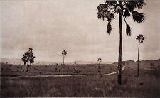 PLATEAU de l'ISALO à MADAGASCAR - Cliché numéroté du Service Photo de Madagascar