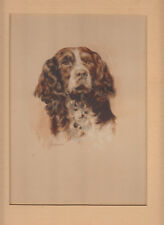 Superb mounted watercolour painting of a springer spaniel signed M Board