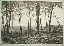 Auguste ALLONGÉ (1833-1898) estampe c1900 d'un fusain de paysage Barbizon