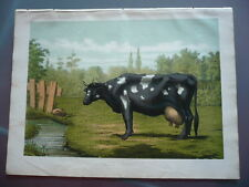 GRAVURE 1883 LA VACHE FLAMANDE