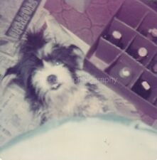 Dog Close Up FOUND PHOTO Color FREE SHIPPING Original Snapshot VINTAGE 85 12
