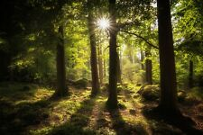 Forest Sunset Trees Nature Landscape HD POSTER