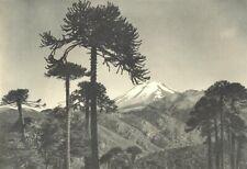 CHILE. Volcan Lonquimai visto desde el Paso de Arenales. Volcano 1932 print