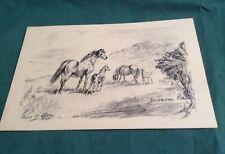 Original Anne Bullen horse postcard: Dartmoor ponies