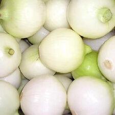 500 CRYSTAL WHITE WAX PEARL ONION Allium Cepa Seeds