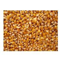 Bulk Grains 100 percent Organic Yellow Popcorn Bulk 5 Lbs - SPu309278