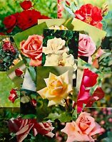 1973 Roses Flowers Selection Lot 20 pcs Postcards Set Vintage