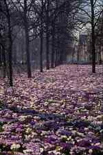 513075 Spring Time In The  Lange Voorhout  Area Holland A4 Photo Print