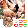 100Pcs Poultry Bands Adjustable Foot Ring Leg Clip For Chicken Duck Bird Pigeon