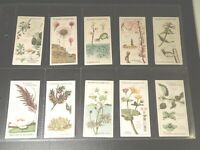 1923 Players Struggle For Existence set 25 Tobacco cards complete collection