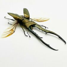 More details for longjaw beetle cyclommatus metallifer (spread) (huge) insect specimen taxidermy