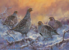 NEW Partridges in the Snow Christmas Cards pack of 10 by John Trickett. C547X