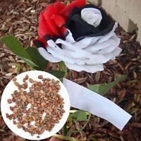 50 Stücke Herrliche Seltene Rote Weiße Rose Blumensamen Schöne Hauspflanze Gart