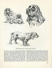 SUSSEX SPANIEL VINTAGE  1963 DOG PRINT SKETCH PAGE ARTIST BRIDGET OLERENSHAW