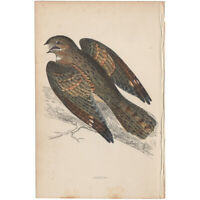 Morris antique 1863 hand-colored engraving Bird print Pl 73 Nightjar