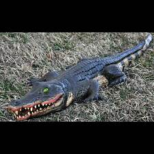 Realistic 4Ft Long SWAMP ALLIGATOR PROP Foam Filled Luau Pirate Party Decoration