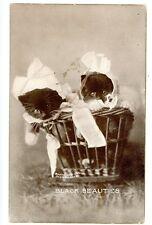 Animals/Cat -BLACK BEAUTIES-KITTENS IN BASKET-C.E. Dollars/M.H. Sheahan Postcard