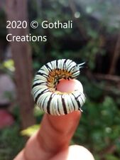 Digital Photograph Nature Insects Animal millipede colorful Asia greeting cards