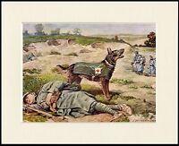 GERMAN SHEPHERD RESCUE WAR DOG LOVELY LITTLE DOG PRINT MOUNTED READY TO FRAME