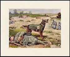 GERMAN SHEPHERD RESCUE WAR DOG LOVELY LITTLE DOG PRINT MOUNTED READY TO FRAME