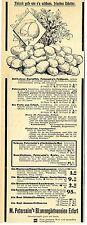 M. Petersheim Erfurt Blumengärtnereien Saatgut Historische Reklame von 1903