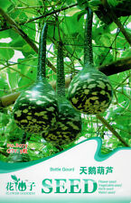 5 Original Pack Seeds Swan Shape Bottle Gourd Seeds Organic Vegetables B073