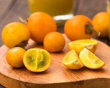 Naranjilla • Lulo • 20 Samen/seeds • Solanum quitoense • essbar • Quito Orange
