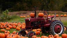 Connecticut Field Pumpkin Seeds, Traditional Pumpkin, Halloween, Pie, Free Ship