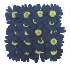 Pressed flowers, navy marguerite 20pcs for floral art craft scrapbooking