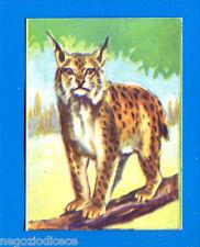 ANIMALI - Lampo 1964 - Figurina-Sticker n. 89 - LINCE -New