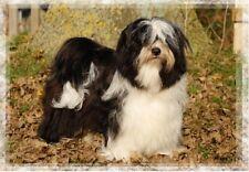 Tibetan Terrier A6 Blank Card Design No 10 By Starprint