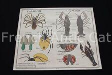 O993 Affiche scolaire vintage 15 Hanneton 16 Araignée Écrevisse Rossignol 90*75