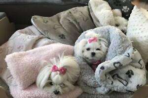 Hunde Schlafsack,Hundeschlafsack ,Kuschelecke,Spielplatz BONE BRAUN dogszone