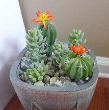 Artificial Succulents Mini hyacinth Plants Flowering Cactus Set of 6