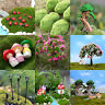 Hot Miniature Fairy Garden Ornament Decor Pot DIY Craft Accessories Dollhouse