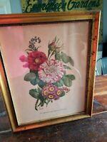 Vintage Floral Botanical Lithograph Print Zinnia Gold Gilded Frame Benoit Chirat