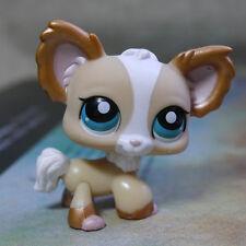 Chihuahua Tan white #1082 LITTLEST PET SHOP LPS mini Action Figure