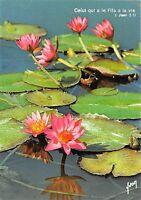 B52067 fleurs flowers nenuphar
