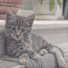 3 Servietten Kleines Kätzchen grau weiss wartet
