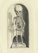 Skeleton Child Front, De Humani Corporis, 1685, Govert Bidloo, Anatomy Poster