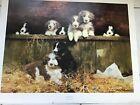 David Shepherd print 'Muffins Pups' Bearded Collies New never framed